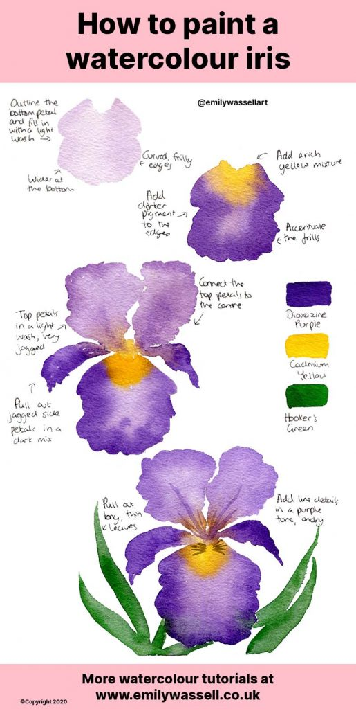 how-to-paint-a-watercolour-iris