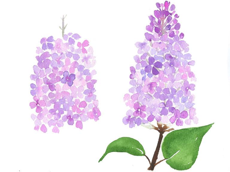 watercolor-lilac-tutorial