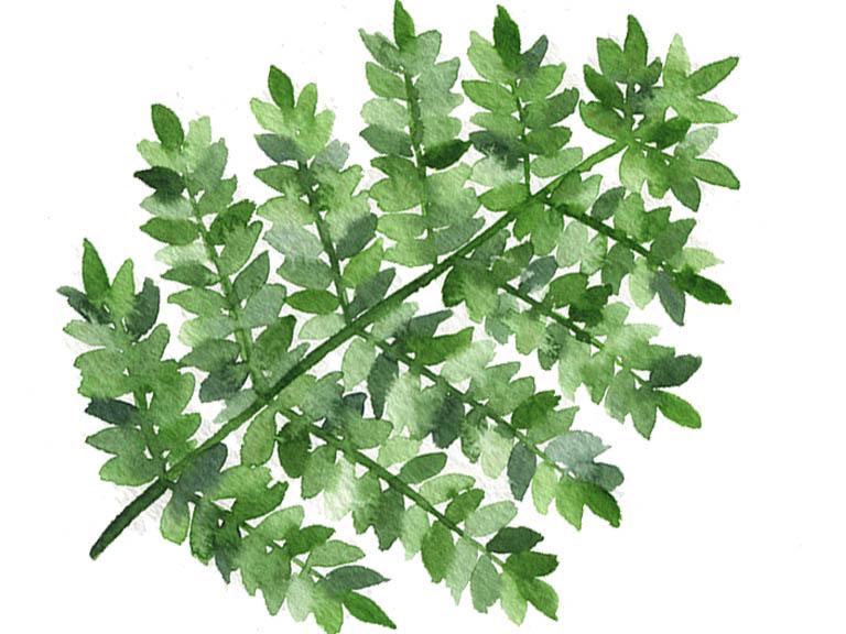 watercolour-fern-tutorials-leaves