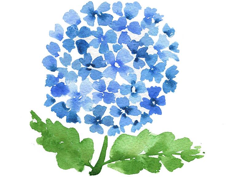 watercolor hydrangea tutorial video