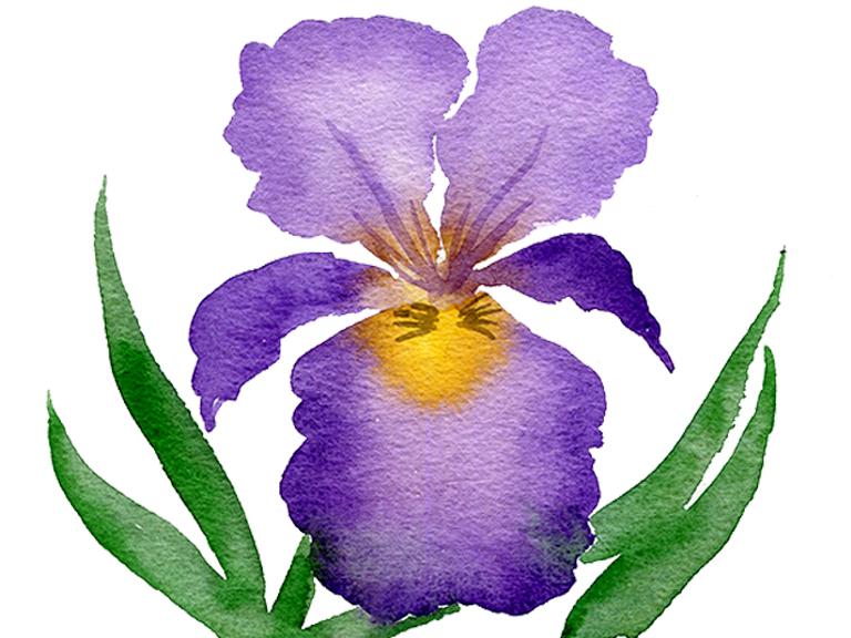 watercolour-iris-painting-tutorial