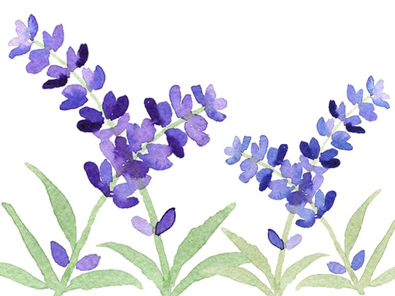 watercolour-tutorial-how-to-paint-lavender