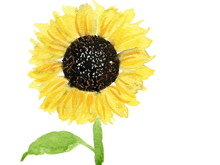 watercolor sunflower tutorial