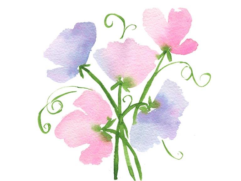 paint watercolor sweet pea flowers